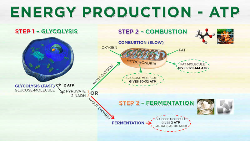 conscious-breathing-energy-production - Conscious Breathing