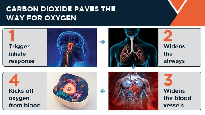 Carbon dioxide paves the way for oxygen